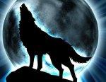 Avatar von Wolfsblut