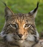 Avatar von lynx