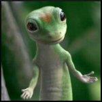 Avatar von Geckolord
