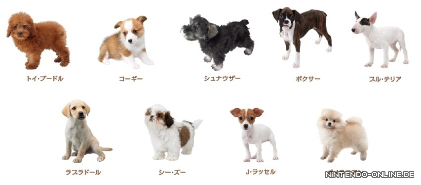 nintendogs cats komplette liste der hunderassen. Black Bedroom Furniture Sets. Home Design Ideas